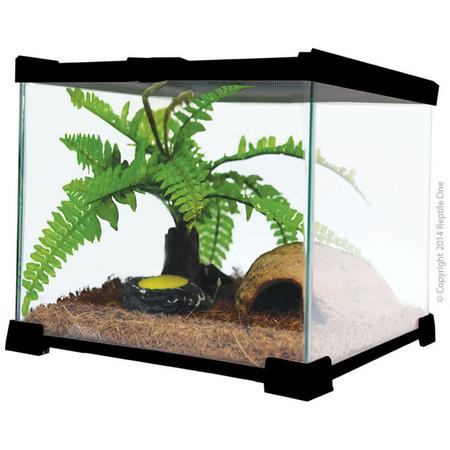 Reptile One Glass Tank Mini T2 Terrarium  Black Large (30Lx30Wx30Hcm)