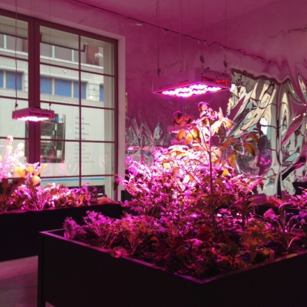Meg Webster, Solar Grow Room, (2016) via Art Observed