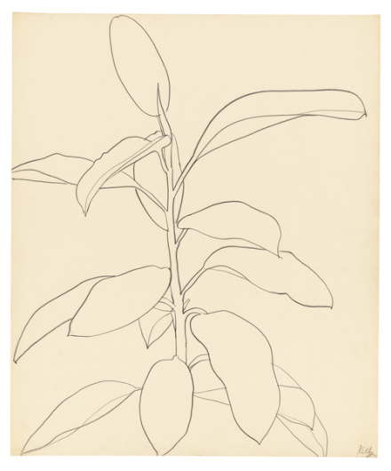 Ellsworth Kelly, Rubber Plant (1957), via Matthew Marks