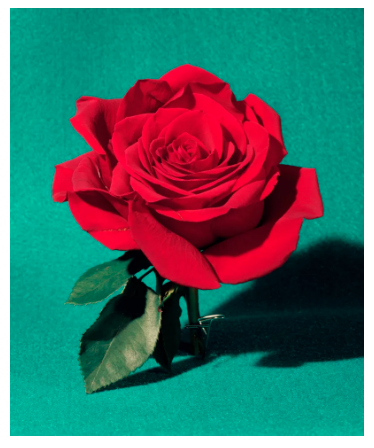 Sara Cwynar, Red Rose (2017), via Foxy Production