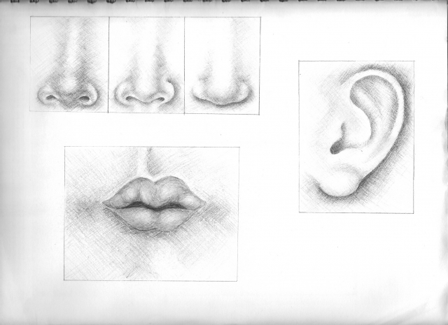 mouth,ear,noses