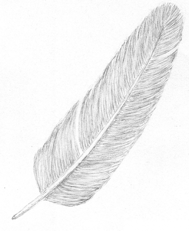 101-feather