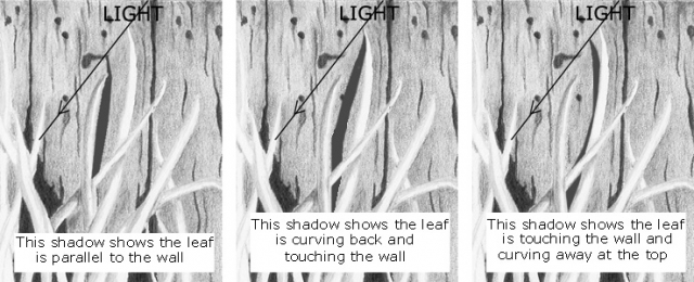 601-barn-wall-SHADOWS-ASSIST