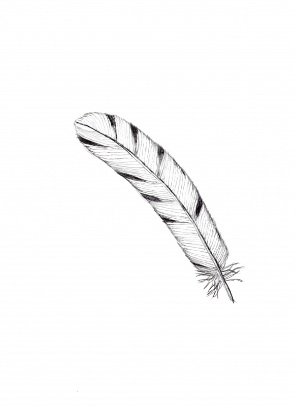 feather-exercise1