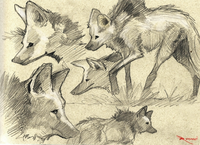 lobo guará sketches