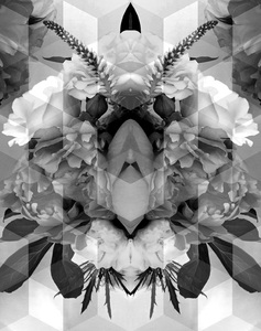 CAROL GREENAN BOUYOUCOS Portraits in Nature Archival digital print