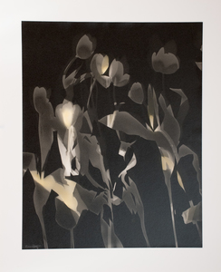 ENNID BERGER Tulips oil paint on silver gelatin photogram