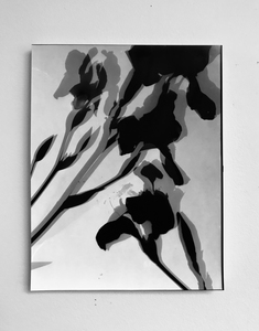 ENNID BERGER Tulips and Other Botanicals unique solarized silver gelatin photogram