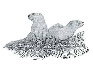 Michael Guy Tomassoni Chesapeake Bay Animal Series Pen & Ink