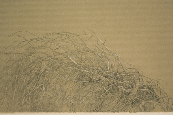 Shona Macdonald Around New Mexico pencil and white pencil on toned paper