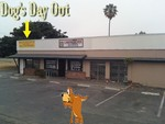 Dog's Day Out in Huntington Beach, CA, photo #4
