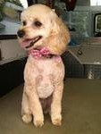 First Class Pet Mobile Grooming Spa in Cherry Hill, NJ, photo #16