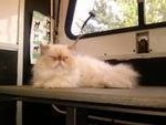 First Class Pet Mobile Grooming Spa in Cherry Hill, NJ, photo #18