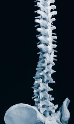 Spine_blue