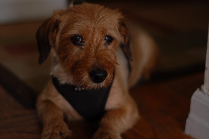 Dog-walkers-new-york_george