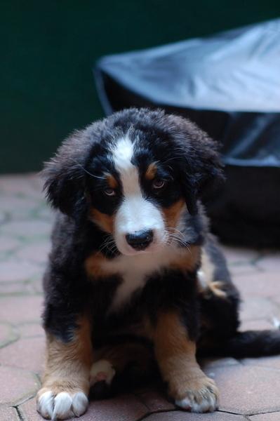 Manhattan-puppy-care_wrigley