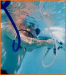 Always Clean Pools & Patios in Miami, FL, photo #3