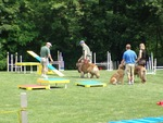 Alden's Kennels Inc in Ringwood, IL, photo #7