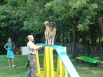 Alden's Kennels Inc in Ringwood, IL, photo #8