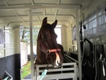 Equine Dentistry - mobile services in Ramona, CA, photo #1