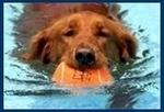 Homeward Hounds Peachtree City Pet Sitting and Daycare in Sharpsburg, GA, photo #1