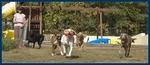Homeward Hounds Peachtree City Pet Sitting and Daycare in Sharpsburg, GA, photo #2