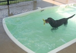 Pet Resorts of America in Nashville, TN, photo #2