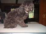 Angie's Pet Grooming in Bristol, TN, photo #2