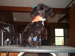 Angie's Pet Grooming in Bristol, TN, photo #3