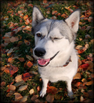 True Friends Pet Care in Simi Valley, CA, photo #1