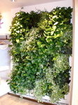 Plantscapers, Inc in Irvine, CA, photo #3