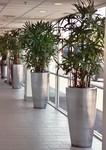 Plantscapers, Inc in Irvine, CA, photo #4