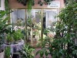 English Garden Florist in Las Vegas, NV, photo #2