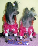 Fetching Grooming & Pet Boutique in Scranton, PA, photo #3