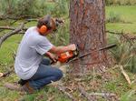 Staten Island Tree Experts in Staten Island, NY, photo #3