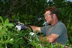 Staten Island Tree Experts in Staten Island, NY, photo #4