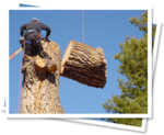 Pay Less Tree Care in Roswell, GA, photo #1