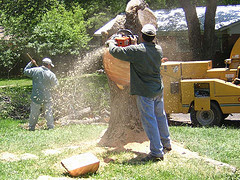 Grand_rapids_tree_removal