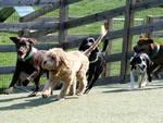 Wagsworth Manor Pet Resort in Malvern, PA, photo #9