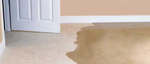 Tanin Carpet Cleaning, Water Damage & Mold Removal Chicago in Chicago, IL, photo #3