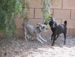 Renaissance Pet Resort & Spa in Banning, CA, photo #4