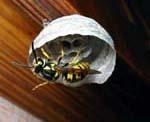 Dominion Pest Control Services in Seattle, WA, photo #2