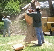 Alexandria_va_tree_removal