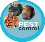All Statewide Termite & Pest in Chandler, AZ, photo #1