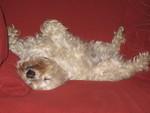 C & M Pet Care Professionals, LLC in Jackson, NJ, photo #3
