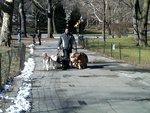 The Dog Guru in New York, NY, photo #3