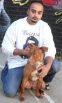 The Dog Guru in New York, NY, photo #5