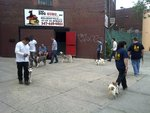 The Dog Guru in New York, NY, photo #6