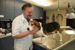 Hopmeadow Animal Hospital in Weatogue, CT, photo #1