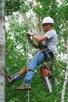 Premiere Tree Services of Lilburn, GA in Lilburn, GA, photo #4